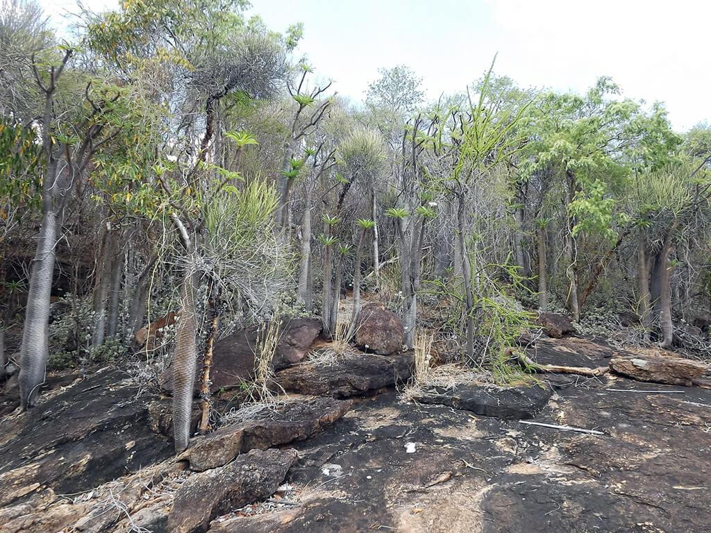 Foresta secca, foresta pluviale, il Madagascar e la sua diversità.